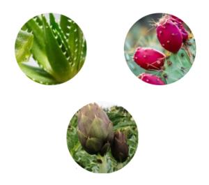 Aloe PhytoComplex - ingredienti - come si usa - composizione - funziona